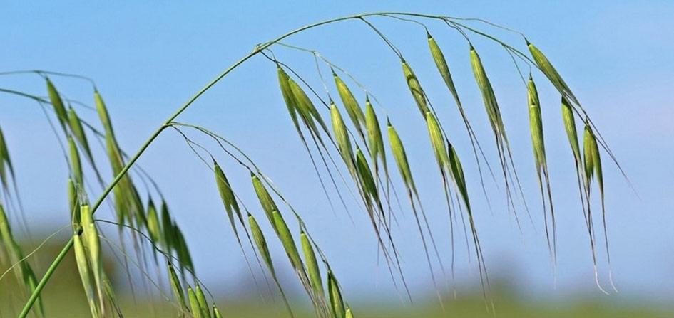 Fleurs de Bach, émotion, négative, positive, elixirs floraux, mélange, personnalisé, équilibre, harmonie, sérénité, énergie, développement personnel, ressenti, libération, épanouissement, écoute, bienveillance, sur-mesure, Yvelines, Hauts-de-Seine, bien-être, exprimer, échange, entretien, émotionnel, harmonisation, flacon, vertu